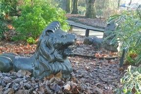 Lions in the Park